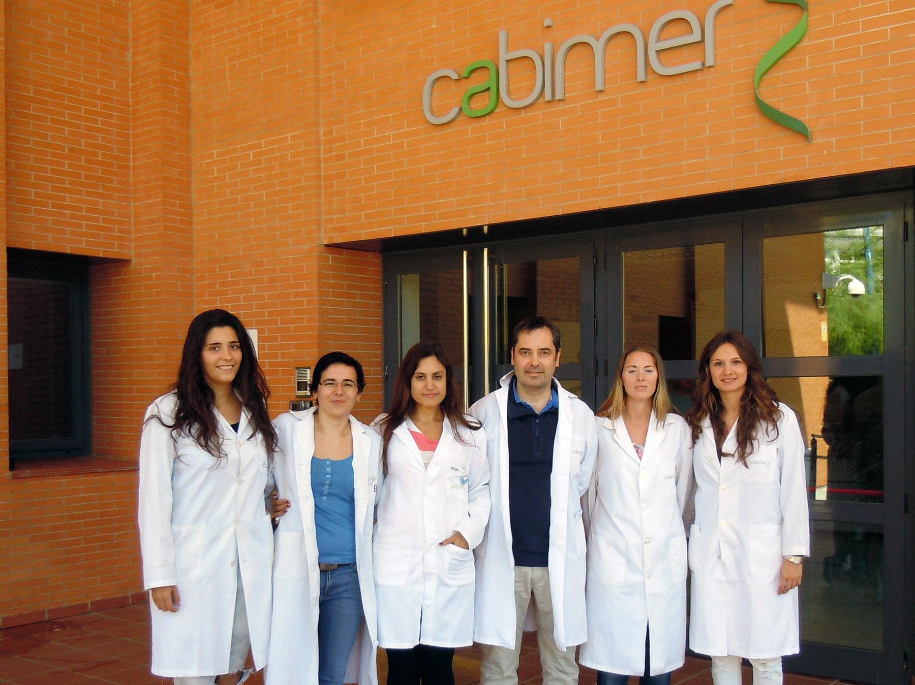 Grupo de investigación plasticidad mitocondrial y replicación del CABIMER