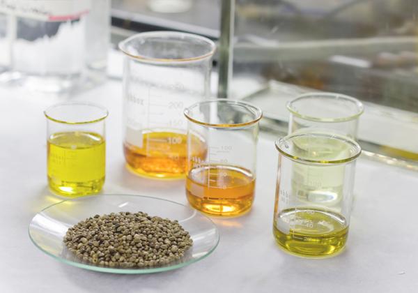 Semillas de cáñamo y diferentes tipos de aceite utilizados en la investigación