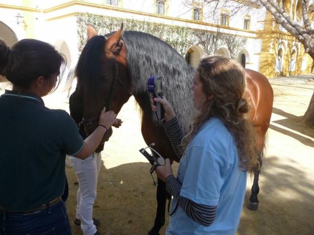 La investigadora María José Sánchez junto a un caballo de PRE