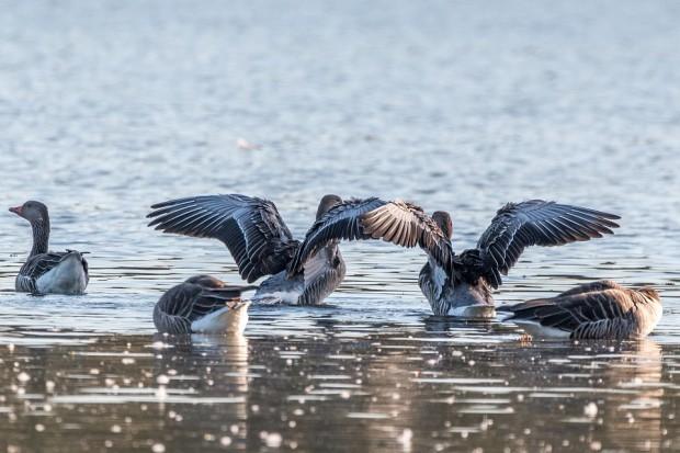Voluntariado para mejorar el hábitat de las aves acuáticas