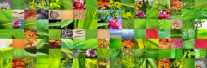 w_biodiversidad_0